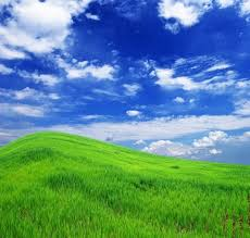 green grass blue sky flowers. Blue Sky Grass From The Highdefinition Picture 9 Green Flowers K