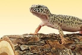 petco animals reptiles. Beautiful Reptiles Petco Is Hosting A  Throughout Animals Reptiles