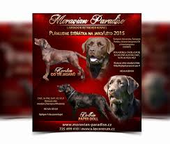 Dog Flyer Template Free Lost Dog Flyers Template Unique Free Dog Walking Flyer Template