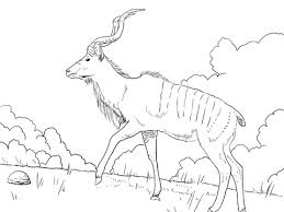 Small Picture Greater Kudu With Male Gender Coloring Page Animal Images Of