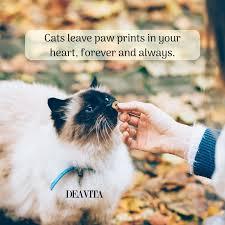 Liebevolle Katzen Zitiert Kurze Sprüche über Haustiere Zuneigung