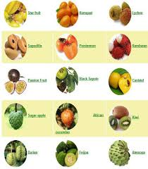 tropical fruit names. Perfect Fruit Tropical Fruit With Names A