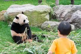 アドベンチャー ワールド パンダ