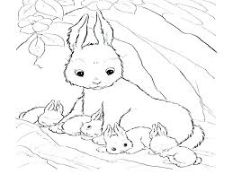Skunk Coloring Page Skunk Coloring Pages G Page Spotted Realistic