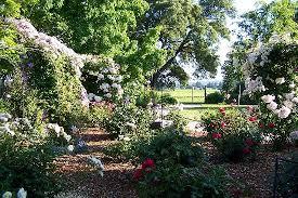 country gardens. Healdsburg Country Gardens: The Gardens With Vineyard Behind.