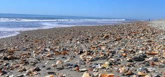 Shelling Tips For North Carolinas Brunswick Islands Visitors