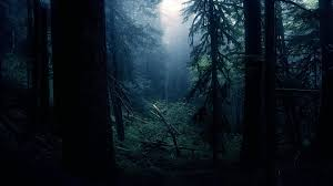dark forest wallpaper 1920x1080. Simple 1920x1080 Dark Forest Wallpaper To Wallpaper 1920x1080 0