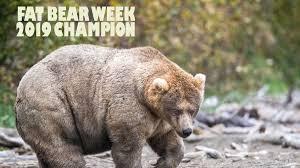 Fat Bear Week 2019 Alaskas Katmai National Parks Fattest
