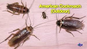 Getting Rid Of Cockroaches In Your Child Care Center 5 Youtube