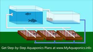 Tilapia Aquaponics Designs Diy Aquaponics Do It Yourself Aquaponics Systems Starter Kit