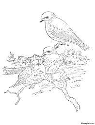 Vogels Kleurplaat 21350 Kleurplaat