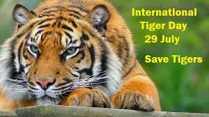 International Tiger day Slogans in Hindi के लिए इमेज परिणाम