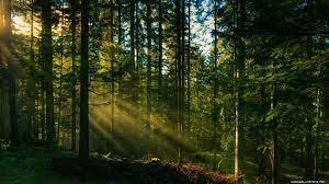 Desktop Nature Forest Wallpaper Hd