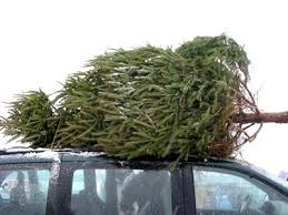 Christmas Trees, cut fresh for you!