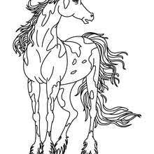 Wild Horse Coloring Pages Hellokidscom