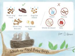 Baby Bird Age Chart What To Feed A Baby Bird For The Best Nutrition