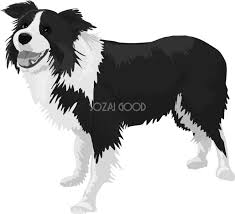 ボーダーコリーの白黒モノクロでかっこいい犬の無料イラスト68063