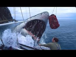 megalodon shark still alive proof 2015. Simple Proof PREHISTORIC MEGALODON SHARK CAUGHT ON CAMERA 2014 REAL PROOFEVIDENCE  Video U2013 Covered Truths To Megalodon Shark Still Alive Proof 2015 T
