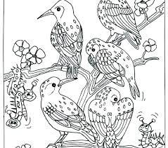 Bird Coloring Page Printable Coloring Image Color Print Bird