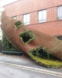 Trellis To Train Your Extraordinary Climbing Plants  Garden Wall Climbing Plants