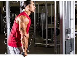 in the article below we will discuss the anatomy of the forearms biceps and triceps their function location in the body and some exercises for each
