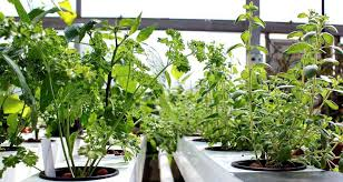 hydroponics garden. What Is Closed System Hydroponics? Hydroponics Garden E