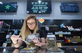 an employee laid out a display of manicured buds at the pueblo west starbuds dispensary