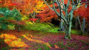 fall nature backgrounds.  Backgrounds Fall Nature Backgrounds 32337 Hd Wallpapers Inside D