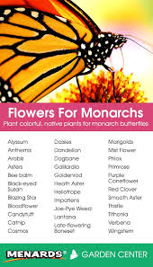 best monarch butterfly habitat ideas butterfly  plant colorful native plants for monarch butterflies