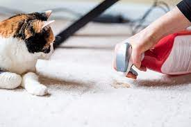 to clean cat vomit out of carpet