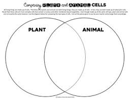 Organelles In Plant And Animal Cells Venn Diagram Plant And Animal Cells Venn Diagram Activity