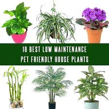 low maintenance office plants. Best Low Maintenance Indoor Plants Easy To Grow Houseplants Pictures Potted Of . Office R