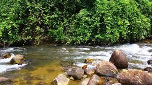Ponmudi   Tourist places in Kerala   Ecotourism   Bike Ride   Kerala Nature  - YouTube