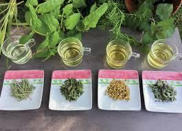grow your own herbal tea garden