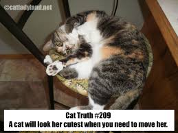 cats are funny cat truth cats are cute and we  cat truth 209 cats are cute and we are suckers