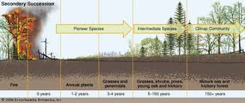 Primary And Secondary Succession Venn Diagram Ecological Succession Definition Facts Britannica Com