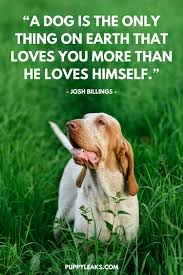 Dog Quotes Love Magnificent 48 Of The Best Dog Inspired Quotes Puppy Leaks