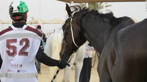the arabian horse is said to be a gift to mankind from today
