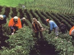 Resultado de imagen para cultivos colombianos