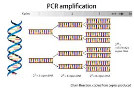 Gmo Testing Options Genetic Analysis Gmo Testing