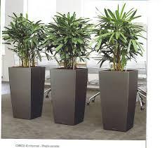 plants for office cubicle. Plants For Office Cubicle: Large Size Cubicle