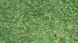 grass field top view green grass soccer field48 green