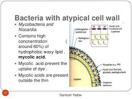 nocardia bacteria diagram nocardia database wiring diagram bacterial anatomy 17 638 cb 1473409192