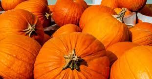 <b>Pumpkins</b>: Health benefits and nutritional breakdown