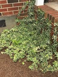 Climbing Plants  WwwcoolgardenmeClimbing Plant