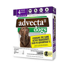 imidacloprid for dogs. Plain Dogs Amazoncom  Advecta II Flea Treatment  And Lice Prevention For Dogs  4 Month Supply Pet Supplies For Imidacloprid Dogs 2