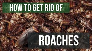 How To Get Rid Of Cockroaches Guaranteed 4 Easy Steps Youtube