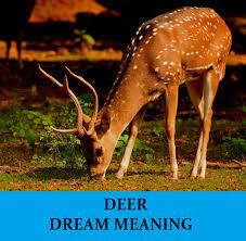 deer dream meaning top 15 dreams