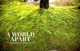 Small Picture Garden Design magazine Moss and Stone Gardens