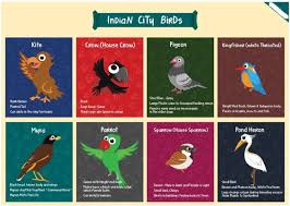 Bird Size Chart Bird Chart For Kids Yellow Indian City Birds Size A3